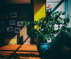 Descubre los beneficios de rodearte de plantas para tu salud