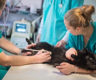Clínica veterinaria: Servicios de Pets Aluche