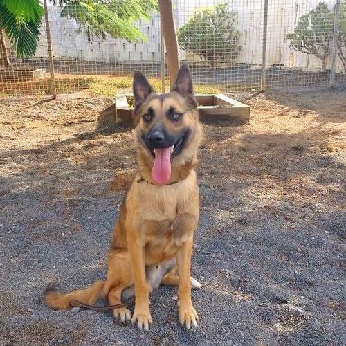 Adiestramiento de Perros Las Palmas de Gran Canaria