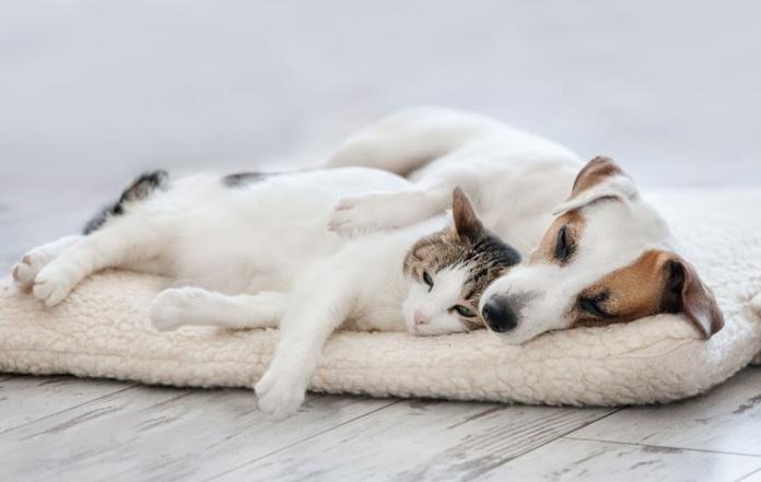 Servicios veterinarios: Productos y servicios de Mascotes Castellbell