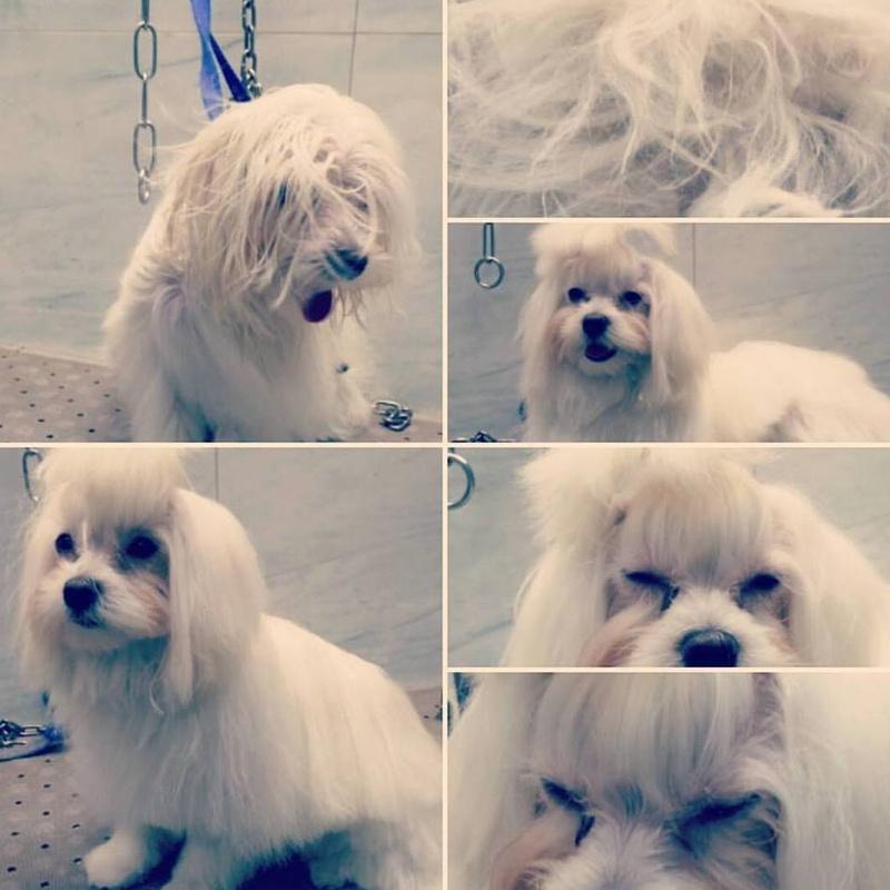 peluqueria canina zaragoza