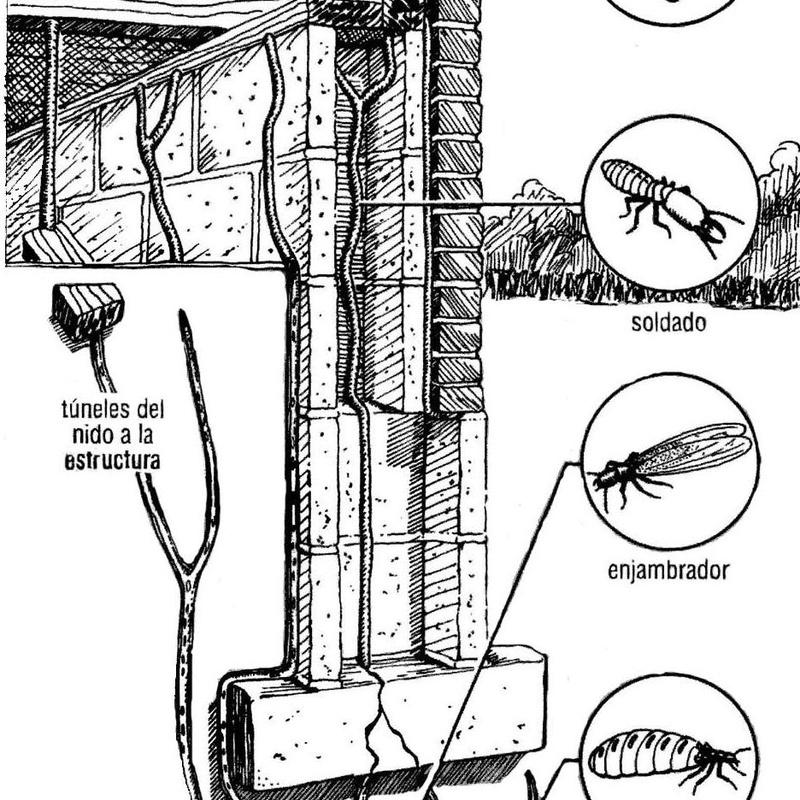 Esquema del termitero