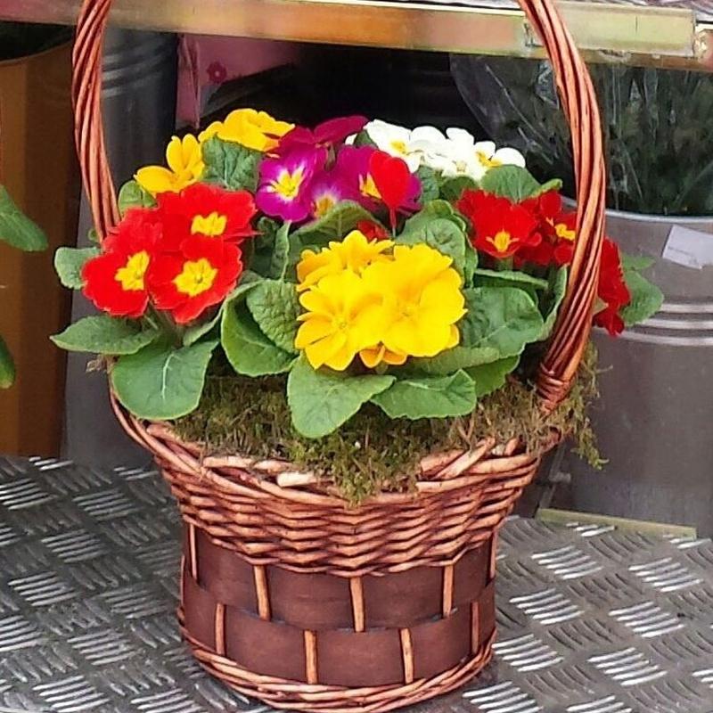 Plantas variadas: Arte floral de Isabella Arte Floral