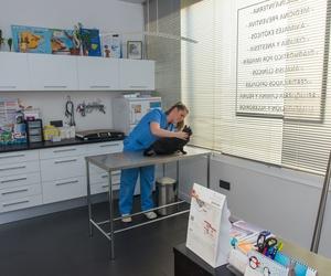 Vacunación de mascotas en Rivas