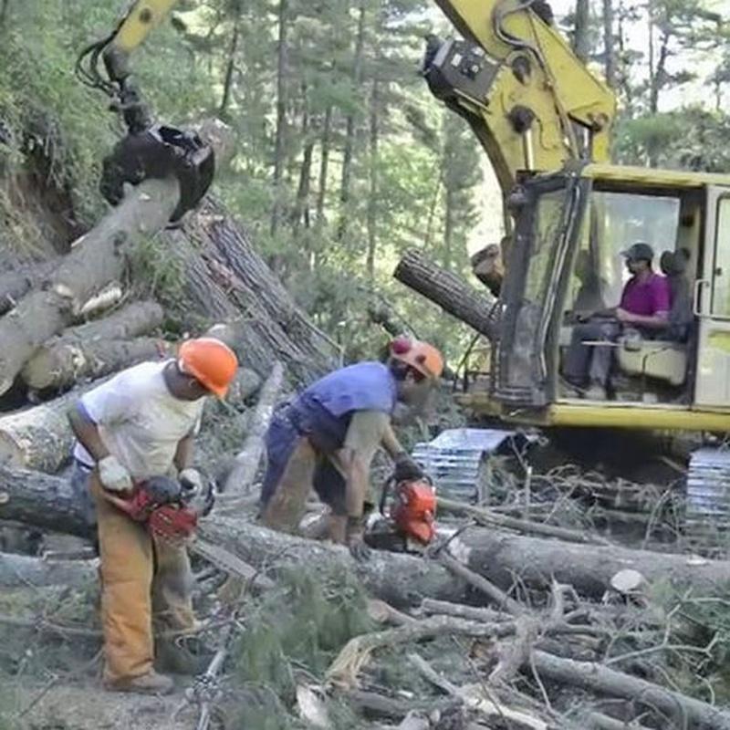 Explotaciones forestales: Productos y servicios de Maderas García Jara, S.L.