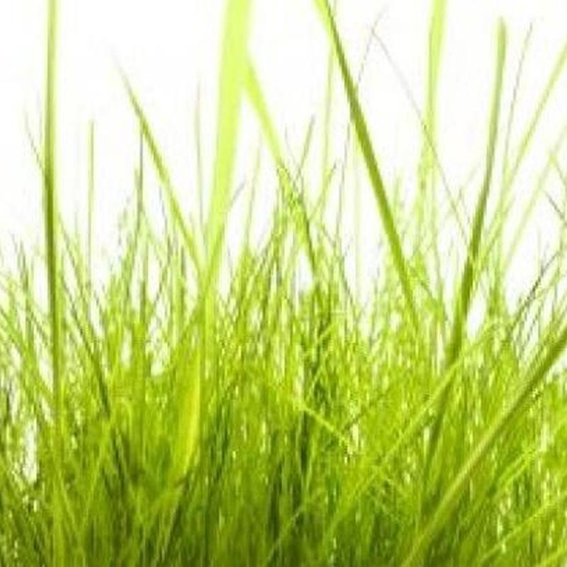Jardines: Servicios de Limpiezas Coloma