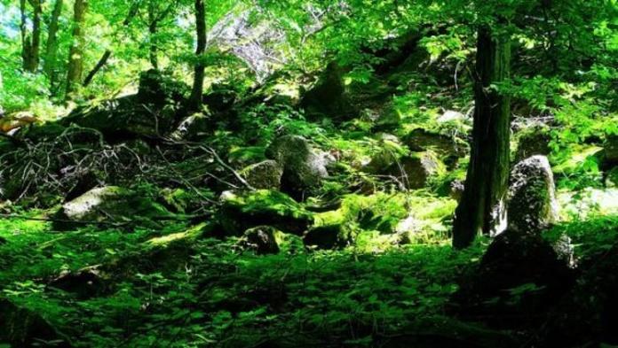 Árboles y arbustos: Productos  de Endanea Garden Center