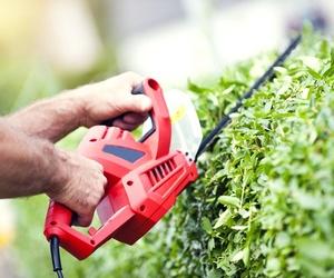 Mantenimiento de jardines en Fuenlabrada