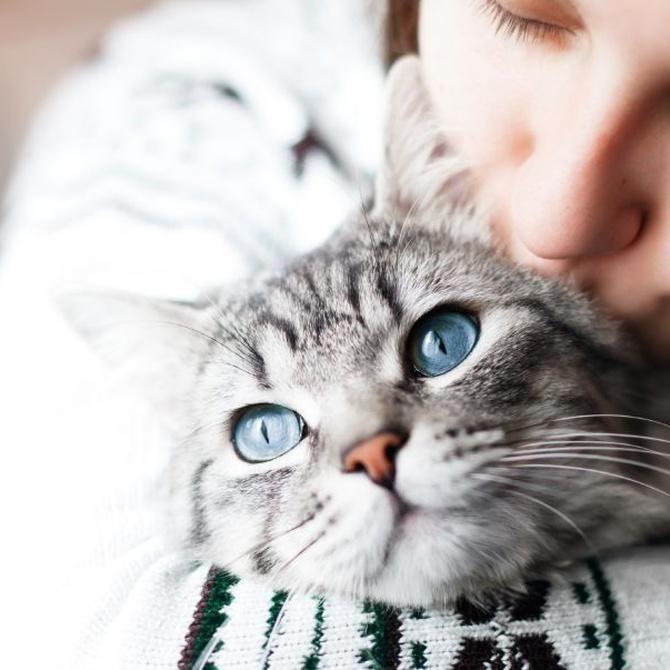 ¿Mi gato puede tener sarna?