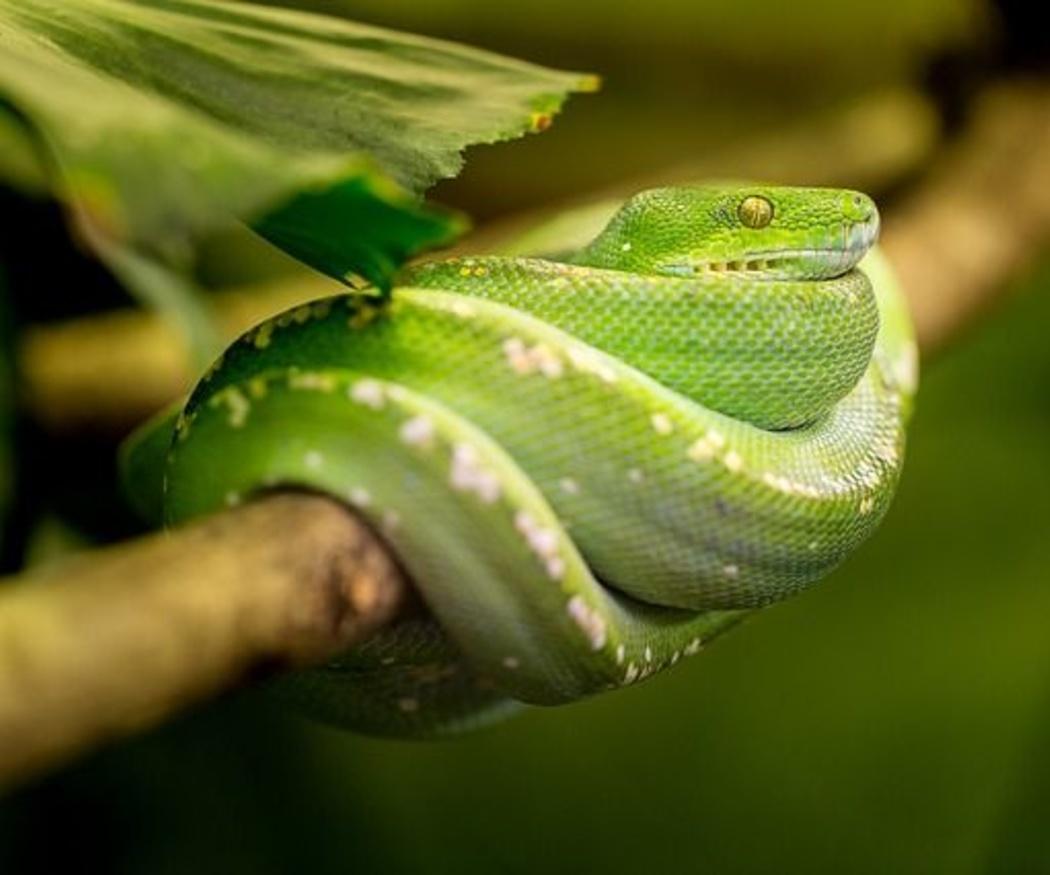 ¿Serpientes en casa? Te enseñamos cómo