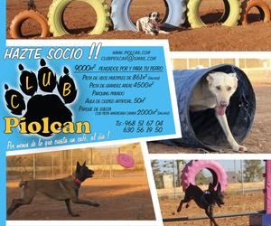Todos los productos y servicios de Adiestramiento canino: Piolcan Adiestramiento Canino y Centro de formación