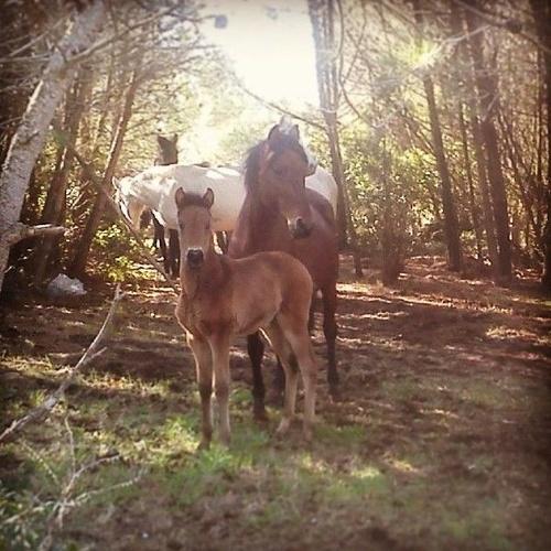 En la finca! Cría de caballos PRE