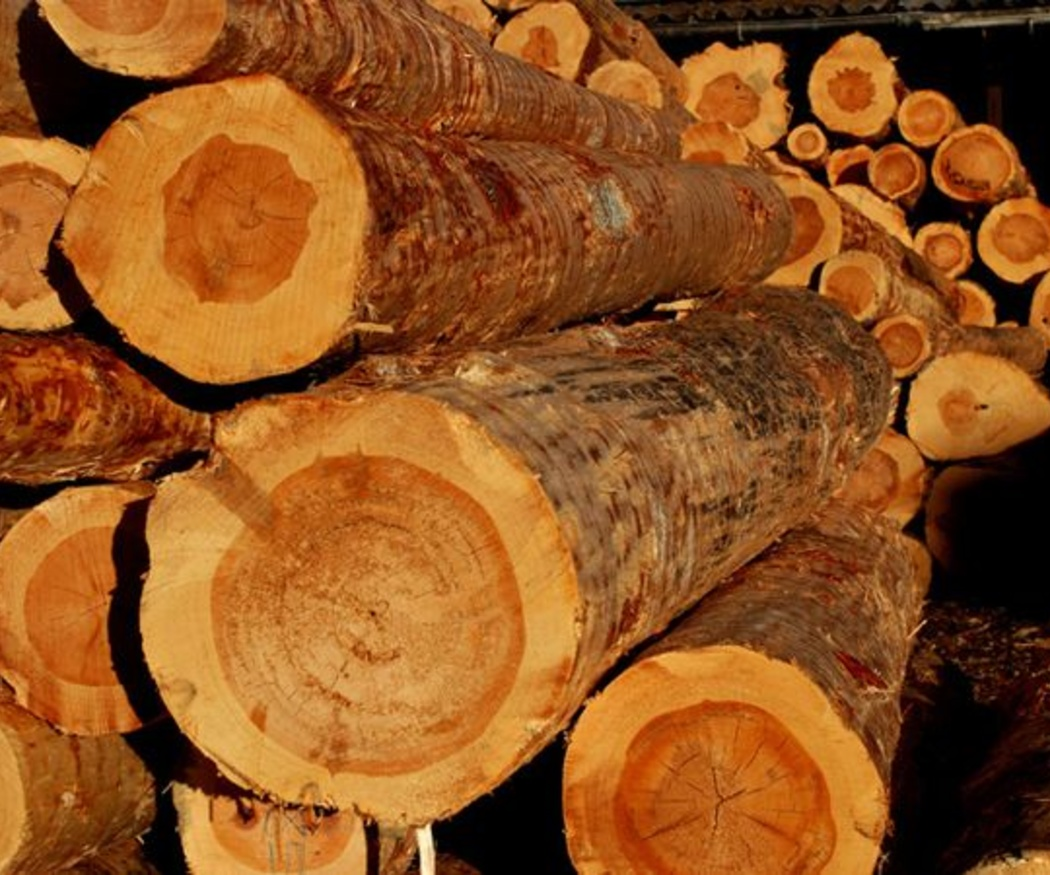 Los nudos en la madera de pino