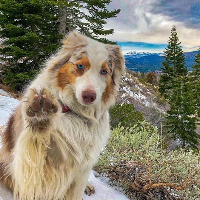 Las enfermedades cutáneas más comunes en los perros