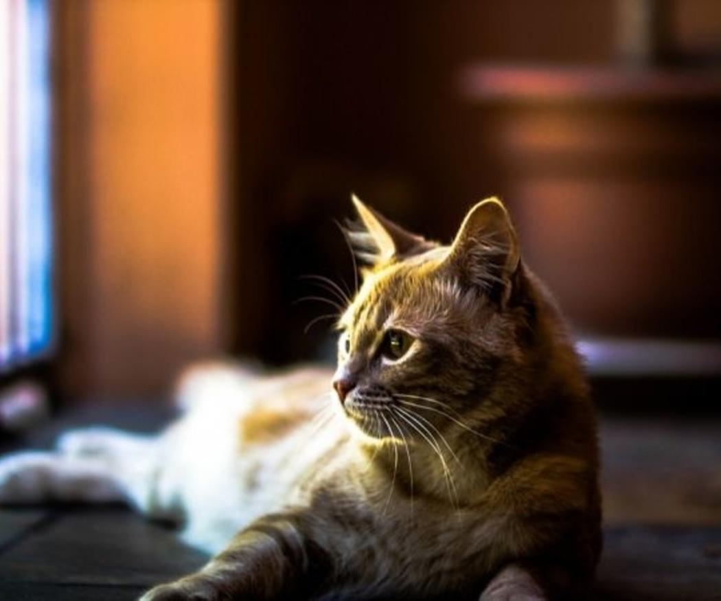 Consejos para el cuidado del gato en casa