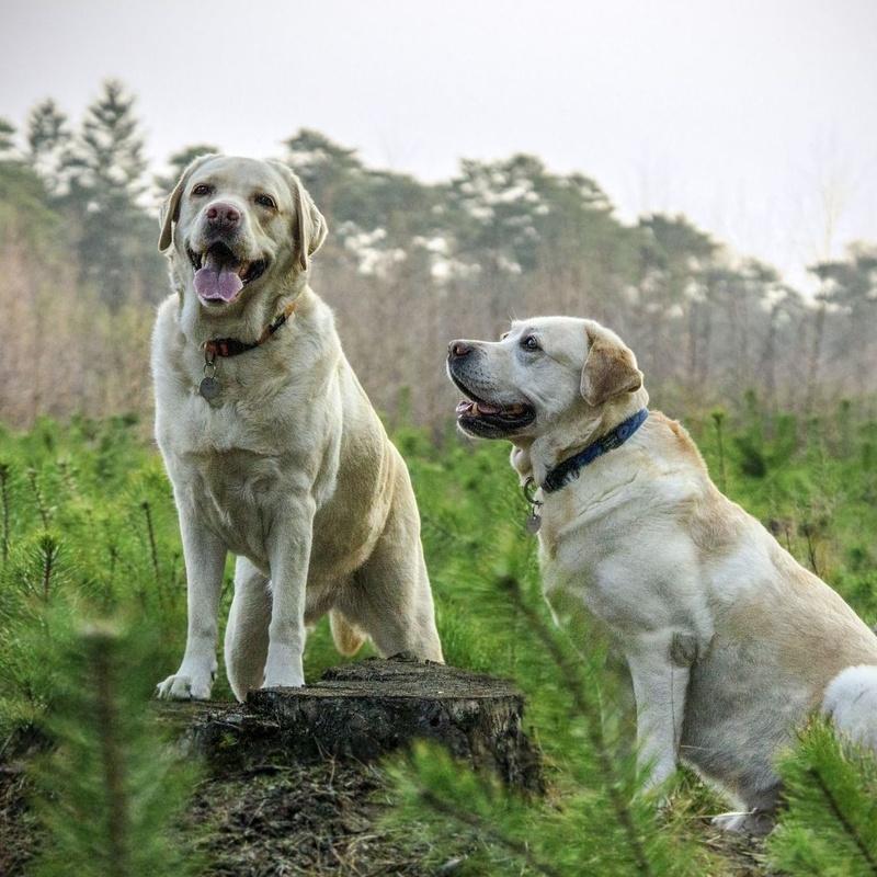 Comederos y bebederos: ¿Qué hacemos?  de Guardería Canina Estíbaliz