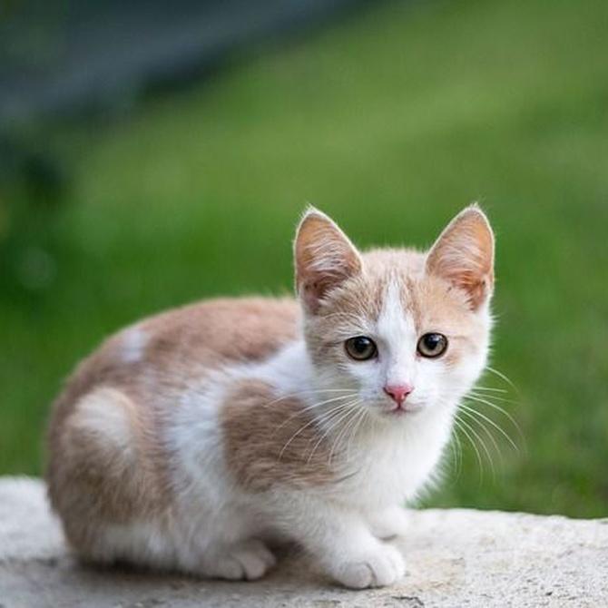 Curiosidades sobre el pelo de tu gato