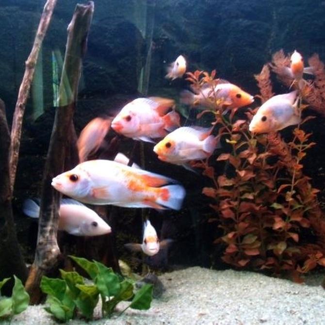 Qué no hacer con los peces de acuario (I)