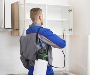 Control de plagas a domicilio en Murcia
