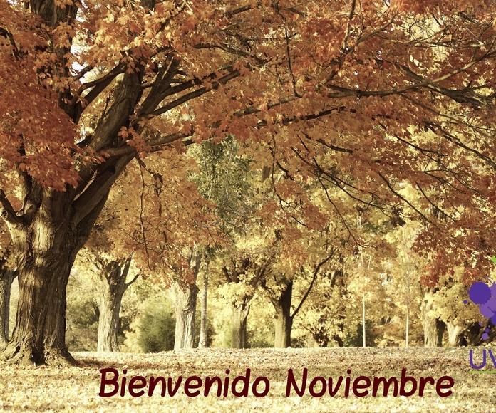 Bienvenido el mes de Noviembre