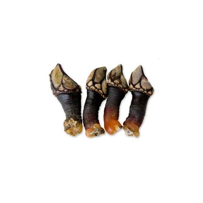 Mariscos: Productos y Servicios de Peixes Vimar