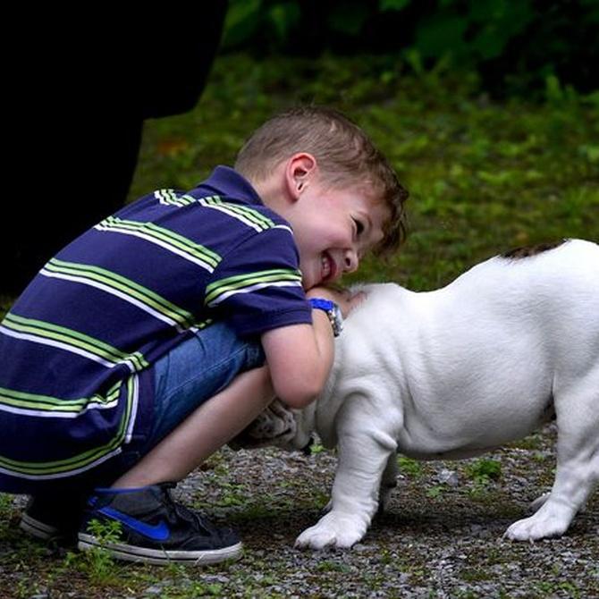 Consejos para tu primera mascota