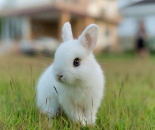 ¿Conoces los conejos enanos?