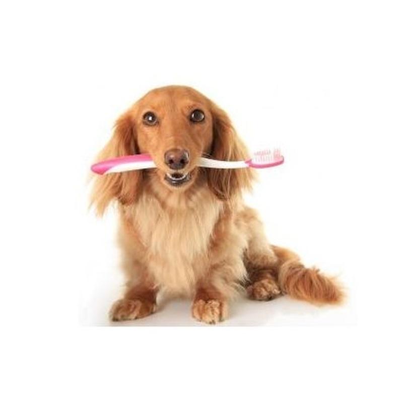 Odontología : Servicios  de Clínica Veterinaria Sol y Luz