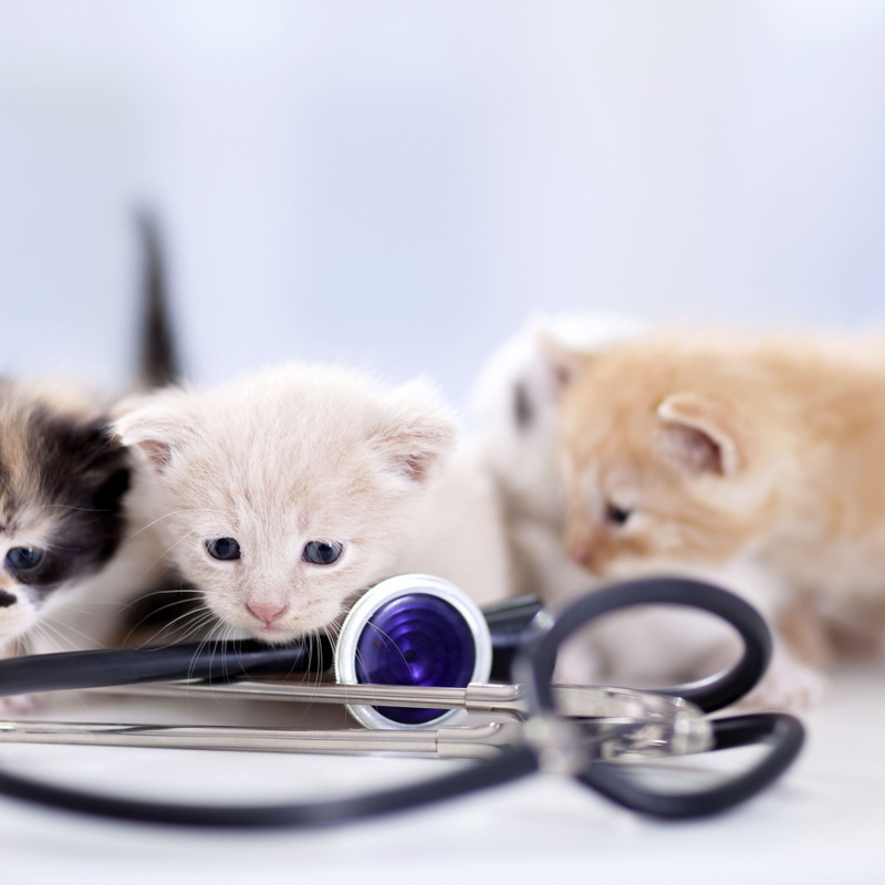 Cardiología: Servicios de Centro Veterinario Esteruelas