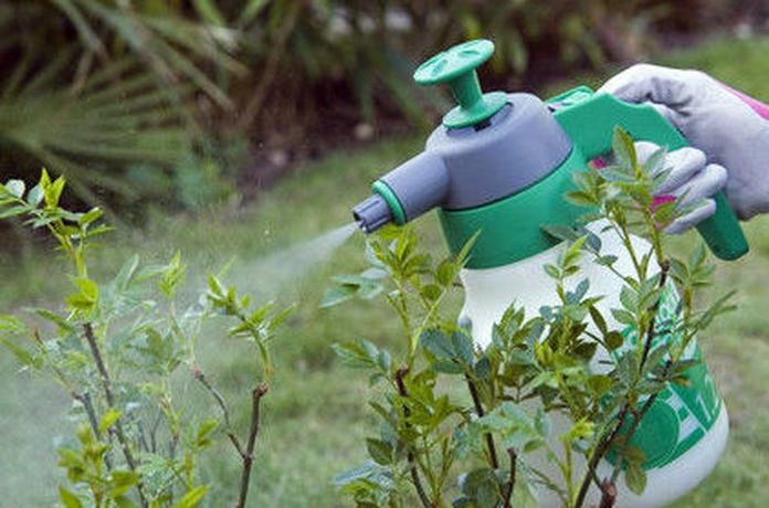 Cuidado de las plantas y antiplagas: NUESTROS PRODUCTOS de Mofusa