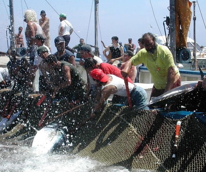 Estiva y desestiva: Venta de pescado y más de Nisorodriguez Taboada