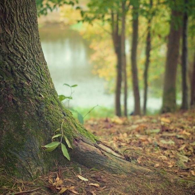 Qué es el destoconado de árboles
