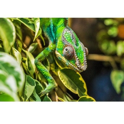 Reptiles: Casa Clemente
