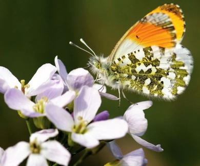 Los límites de la ciencia para saber qué está pasando con los insectos