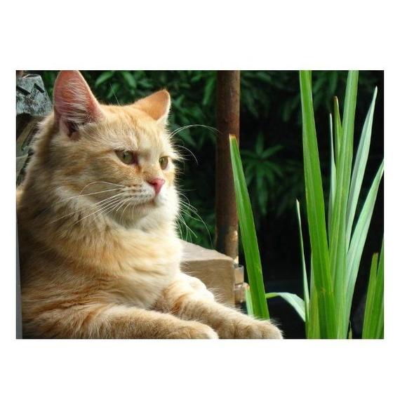 Gatos. Su adaptación a nosotros