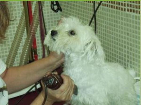 Peluquería Canina: Servicios de Centro Veterinario La Tortuga