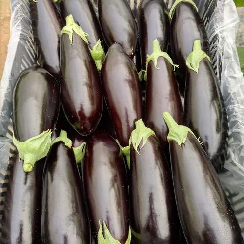 Suministros de frutas y hortalizas en El Ejido