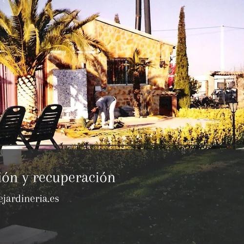 Mantenimiento de jardines y piscinas en Valencia | Sebas Jardín