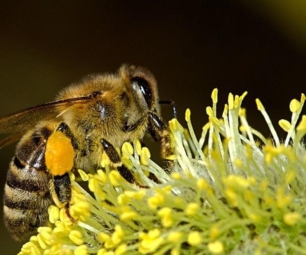Alergia al polen. ¿Cómo tratarla?