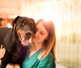 Cirugía : Servicios de Serveis Veterinaris Esparreguera