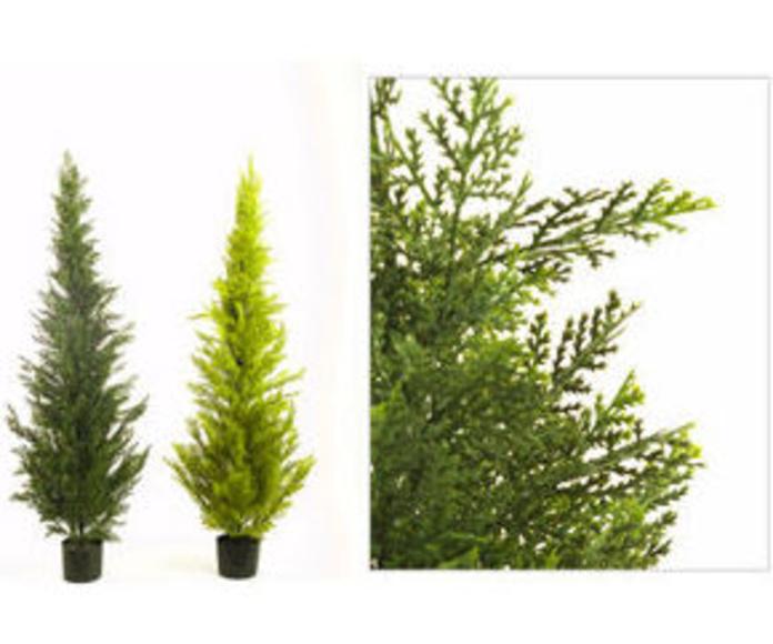 Ciprés 150cm Cedar