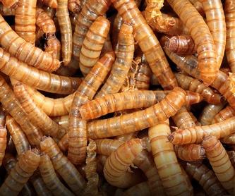 Eliminación de insectos en productos almacenados en Cádiz