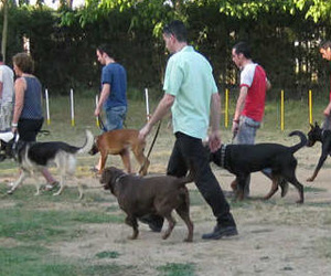 Educación civil canina