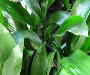 Las cinco plantas más sencillas de cuidar