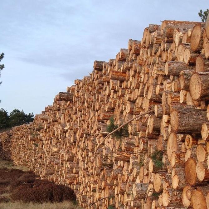 Las maderas más habituales en España