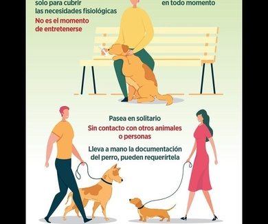 Consejos a tener en cuenta para pasear a tu mascota