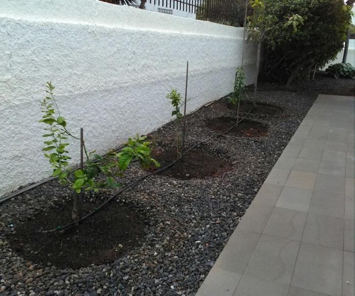 Construcción de jardines: Servicios de GT Verde