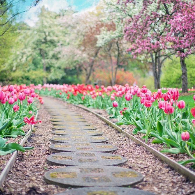 Parterre: el estilo francés de jardín