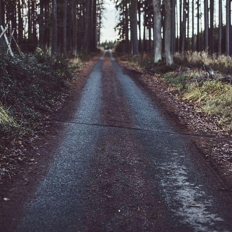 Proyectos forestales: Servicios de Área Ingenieros