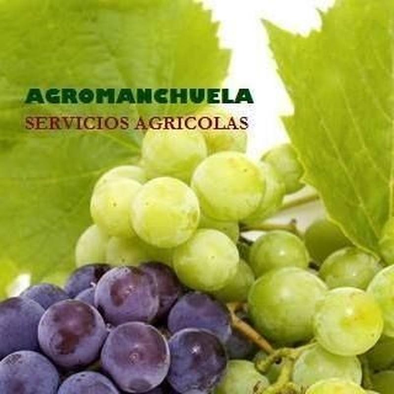 Servicios agrarios: Servicios de AGROManchuela